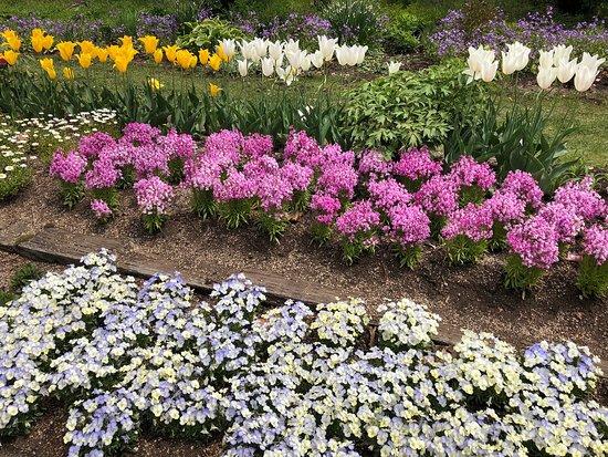 くじゅう花公園は春の花々が咲き誇ってました。