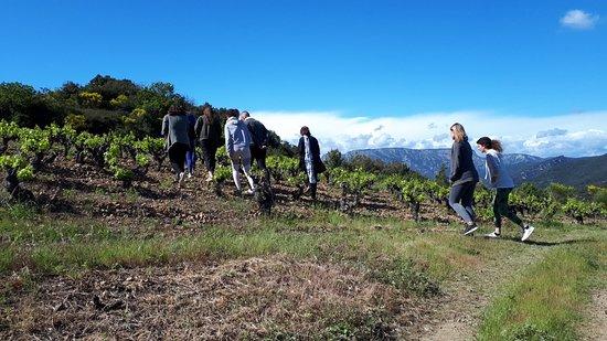 Domaine de Cambis: Premier événement yoga et vin au domaine 👍🏻dégustation,  accords et vins, séance de yoga et découverte du vignoble .