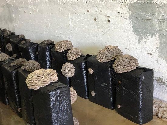 Pradejon, Tây Ban Nha: les cultures de champignons