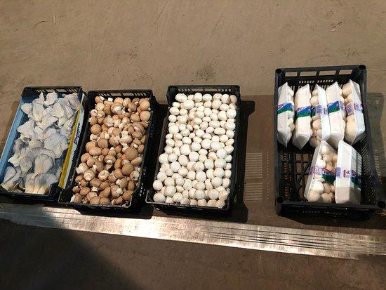 Pradejon, Tây Ban Nha: Toutes sortes de champignons