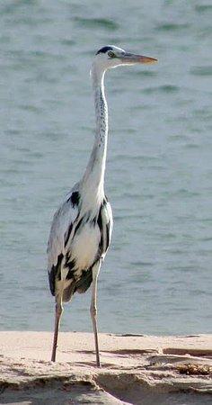 Lamin boattrip birdwatching