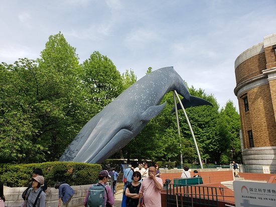 Blue Whale Full Size Model