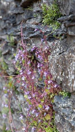 Chateau Feodal: Flowers