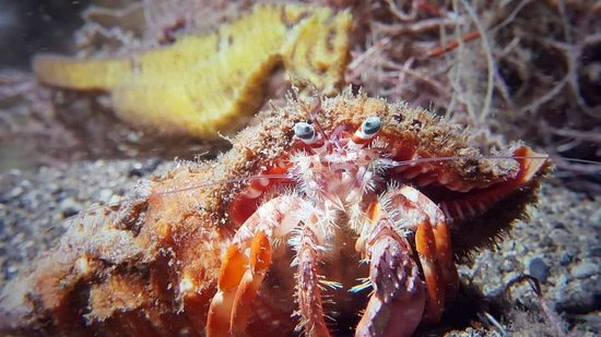 Rabaul, Παπουασία-Νέα Γουινέα: Picture taken while Night Scuba Diving at the Tropicana Jetty