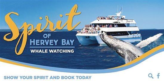 Spirit of Hervey Bay: A great pic of our boat and a whale breaching.l