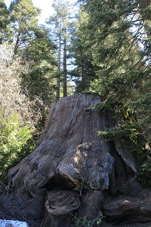 Big Stump Basin - stump (11)