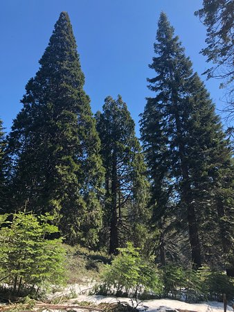 Big Stump Basin - sequoias