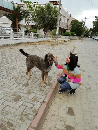 Ayvacik, Turquie : Küçükkuyu Sahili