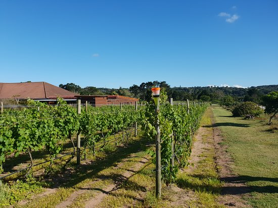 Theescombe Estate Wine Farm