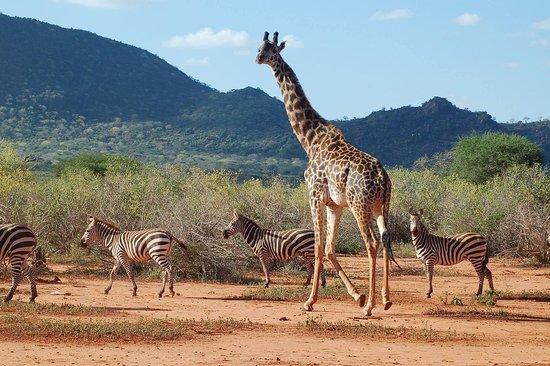 Bushtop Kenya Safaris