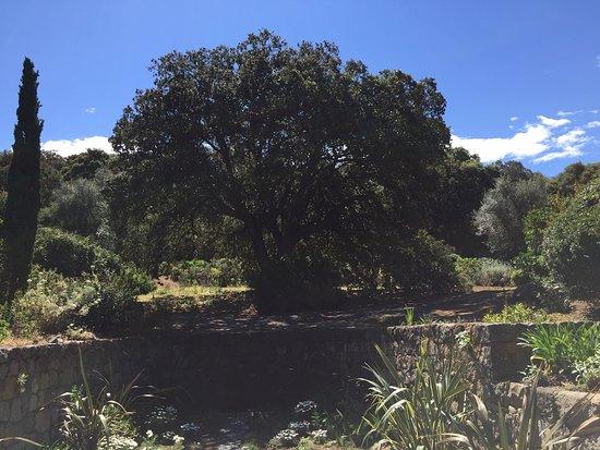 Parc de Saleccia: Un chêne.