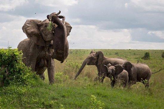 Maroo Mobile Safaris