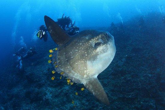 Bali Celebes Dive