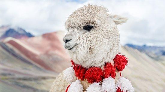 Willka Cusco