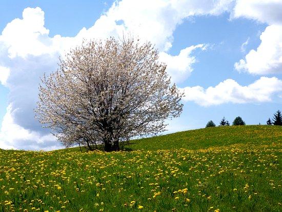 Daiano, อิตาลี: Dopo la nevicata  della settimana passata...esplode la primavera..