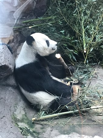 Worth it to see pandas only!
