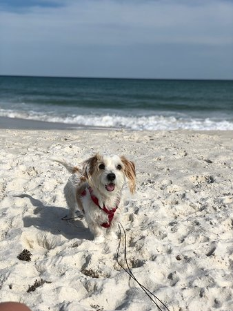 Great Puppy Beach Spot