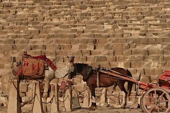 Go Egypt Feed YourEyes
