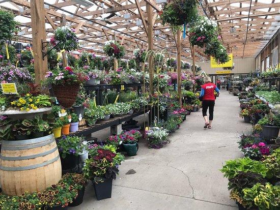 Plants Garden Supplies