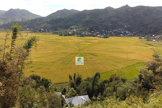 The greatest local site is actually 20km west of Ruteng near Cara Village. The legendary Spider Web Rice Fields are vast creations shaped as implied, which is also the shape of Manggarai roofs that fairly divide property between families. For the best view, stop at the small pavilion, ascend a dirt path to the main viewing ridge.  Almost all Flores overland trip visit thise place on the way go to Kelimutu National Park or back.  Also it's availabel in our package : 6D5N Komodo & Flores Etno - Tr