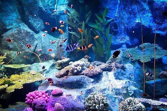 Pattaya Underwater World Tickets with...