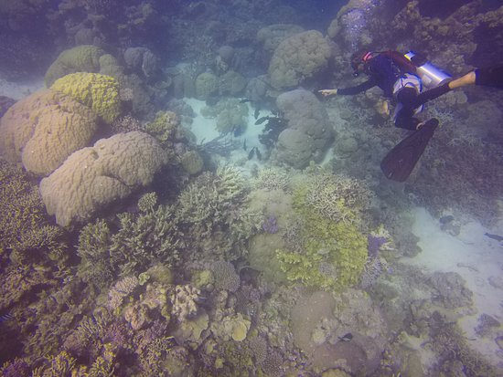 Blue Dive Port Douglas - 2019 All You Need to Know Before