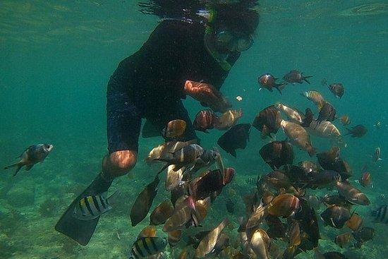 Snorkeling ed esplorare 3 Gilis Lombok