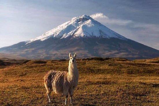 El Barak Ecuador Travel