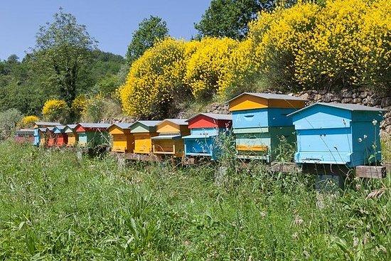 蜂蜜中的蜜蜂