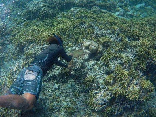 Frogfish At Menjungan Wall Picture Of Menjangan Island