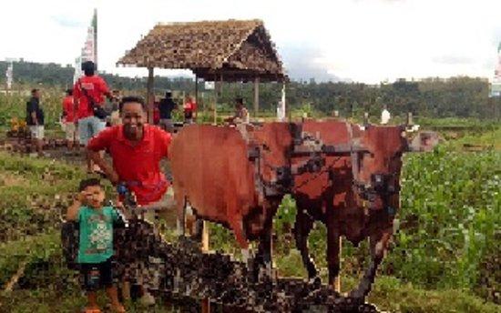 Candidasa Bali Trekking owned by samoglo kade is a profesional tour guide based from candidasa. trip nice for trekking like kastala to tenganan, asak to bugbug, kastala to gumung, bugbug to white beach. tirta gangga to kastala.
