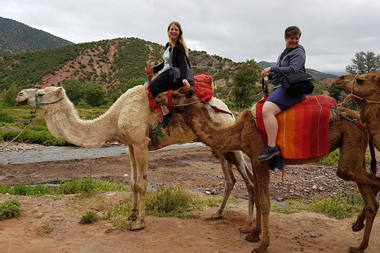 Atlas Mountains Day Trip & Camel Ride