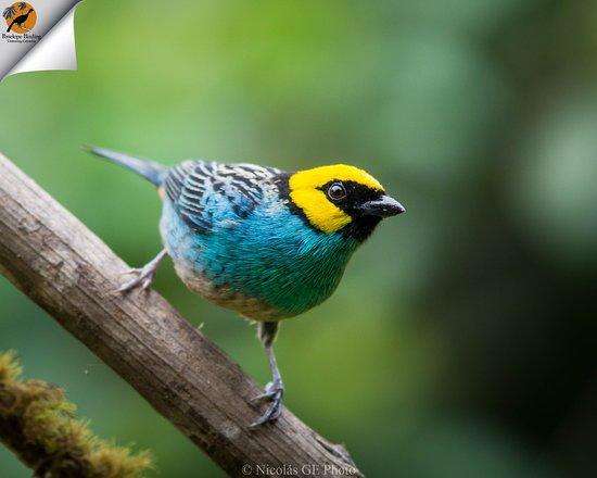 Penelope Birding