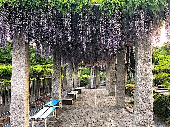 Koshinyama Sogo Park