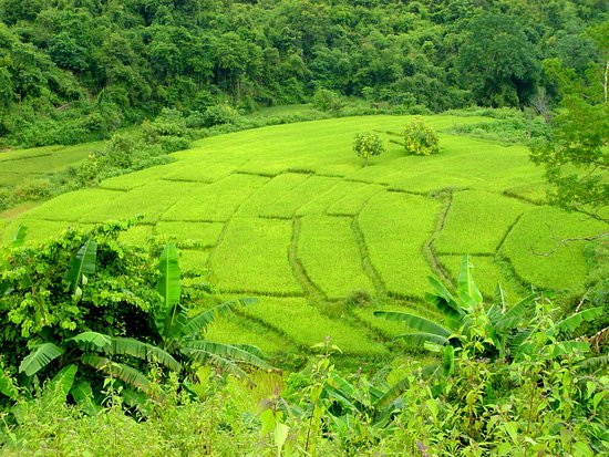 Far North Mountains of Laos, a great place for adventure trekking - Rice paddy Terraces