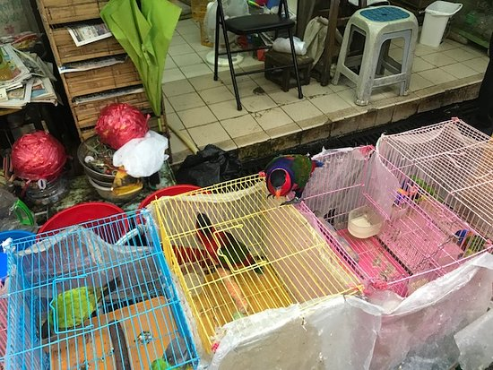 Bird Garden Yuen Po Street: Bird Market Kowloon