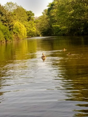 Ruswarp, UK: A River Esk View