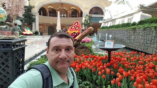 yo con los tulipanes