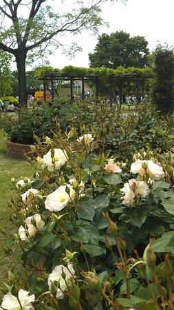 Rose Park Ikoino Hiroba