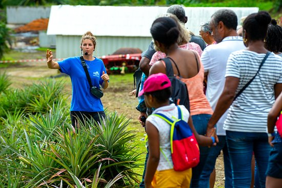 Gros-Morne, Martinique: Découvrez les fruits et légumes que nous cultivons. Nous vous présentons nos pratiques agricoles et nos engagements environnementaux.