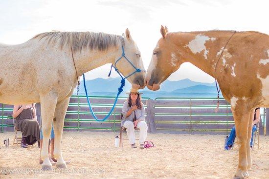 Park City Horse Experience