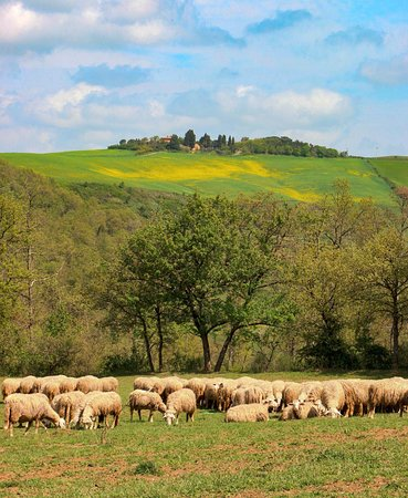 A drive through the Val d' Orcia, not far from Borgo Argenina