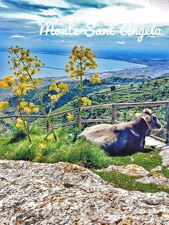 Gargano Peninsula, Italie : Salita pellegrinaggio monte Sant'Angelo con vista sul golfo di Manfredonia
