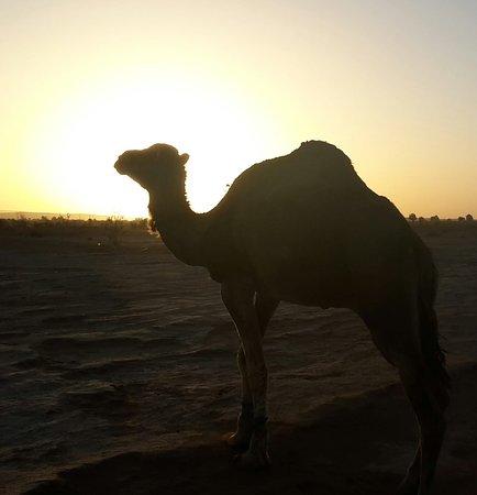 Morocco: Oasis and Trekking in the Desert of Erg Chigaga – kuva