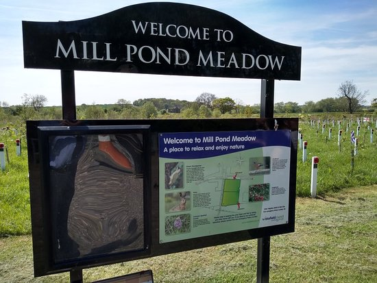 Mill Pond Meadow