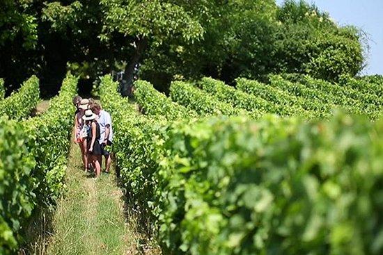 Excursión con cata de vinos para grupos...