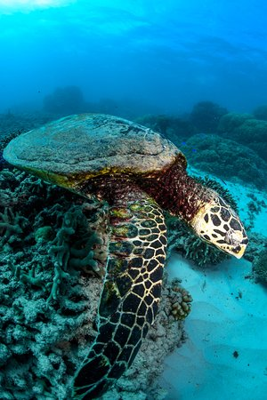 Great Barrier Reef Snorkeling and Diving Cruise from Cairns صورة فوتوغرافية