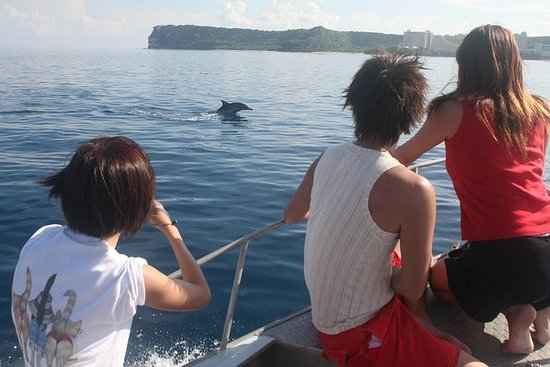 Dolphin Watching and Snorkeling Tour...