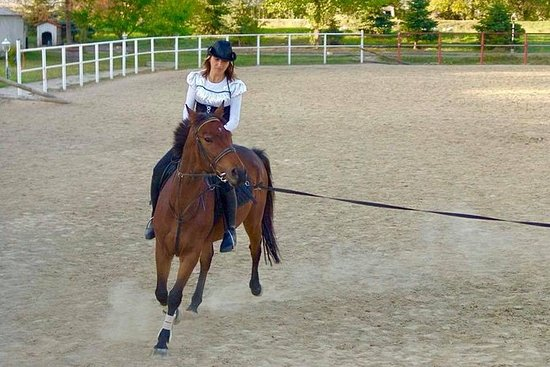 Professional Horse Riding Lessons
