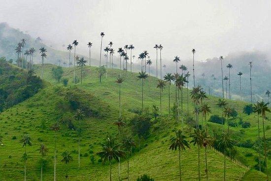 Tour de cire aux palmiers, Salento et...